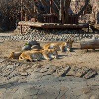 Московский зоопарк. :: Борис Иванов