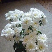 Весенние хризантемы :: Татьяна Юрасова