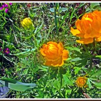 Лютики-цветочки :: Лариса