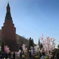 Цветы у стен Кремля :: Александр Савицкий (san05)