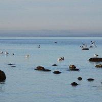 Камушки и чайки :: Николай Танаев