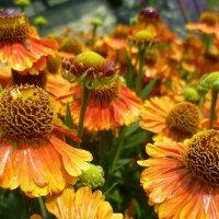 Танец цветов :: Ольга (crim41evp)
