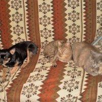 Как кошка с собакой. :: венера чуйкова