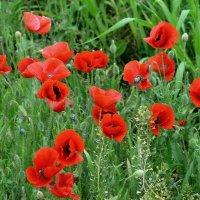Городские цветы :: Геннадий