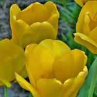 Весна ..фотографии  не грузятся,,, :: backareva.irina Бакарева