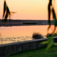 На реке Лиелупе. :: Liudmila LLF
