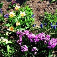 Весна :: Lybov