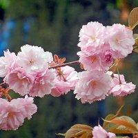 Цветущая весна. :: ТаБу