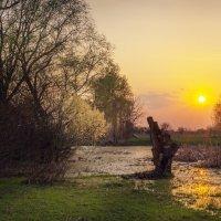 Пень на болоте v.2.0 :: Сергей