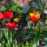 Ещё раз про весну... :: barsuk lesnoi