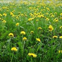 """""""...Час цветенья! В красу одевает он землю..."""" :: Galina Dzubina"""