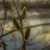 Весна ... :: Олег Кондрашов