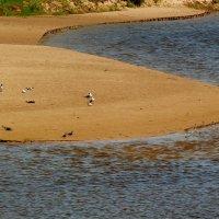 птичий пляж :: Александр Прокудин