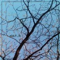 небо и дерево :: maxim