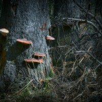 В дебрях лесных :: Алексей (GraAl)