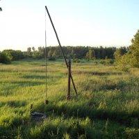 Журавель в поле :: Светлана Рябова-Шатунова