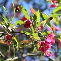 Весны цветение! :: Жанна