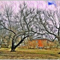 Мы с тобой два дерева... :: muh5257