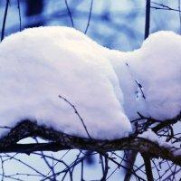 Творения зимы :: Nikolay Monahov