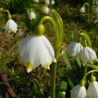 Апрельские цветы :: Татьяна Лобанова