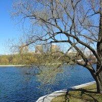 Приветливый апрель :: Ирина Via