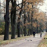 Дубовая аллея в Нижнем парке :: Елена Павлова (Смолова)