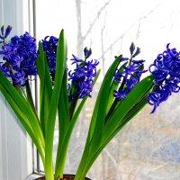 Цветок на окне. :: Александр Владимирович Никитенко