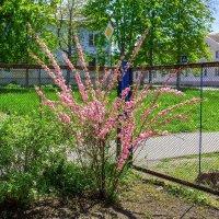 Весна цветет :: Николай Николенко