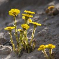 И на песке растут цветы :: Lusi Almaz