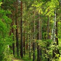 Русский лес :: Нэля Лысенко