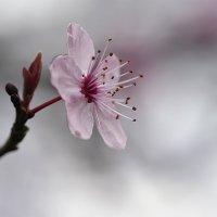 ..Образ жизни - розовый.. :: Лилия .