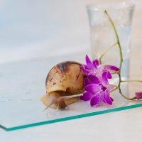 Натюрморт с орхидеей и улиткой по имени Плутон :: Елена Ахромеева