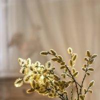 Весенний свет. :: Bosanat