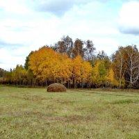 Золотая осень! :: Светлана Рябова-Шатунова