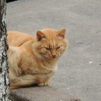 Думы рыжего кота :: Вячеслав Маслов