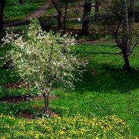 Тёплый день в апреле :: Александр Сапунов