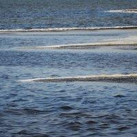косы морские :: Роза Бара