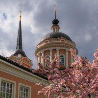 В Москву пришла весна :: Надежда Лаптева