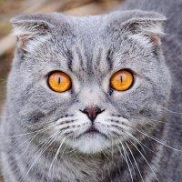 Портрет соседского кота Тимки :: Анатолий Клепешнёв