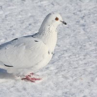 белый на белом :: linnud