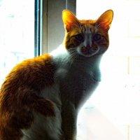 Однажды в понедельник нет во вторник,на подоконнике сидел кот рыжего цвета. :: Павел Нарышкин