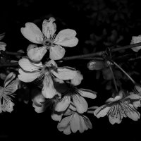 цветение :: Evgenia Glazkova