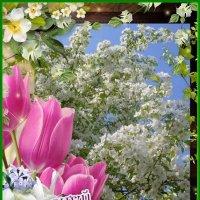 С праздником 1 мая! :: VALENTINA NADSON