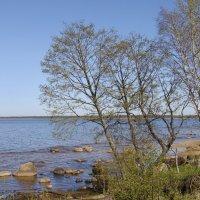 Весенний берег :: lady v.ekaterina