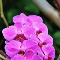 В саду орхидей :: Natali Positive