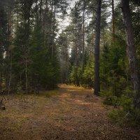 В весннем лесу :: Алексей (GraAl)
