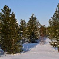 Весенний пейзаж :: Виталий Россия