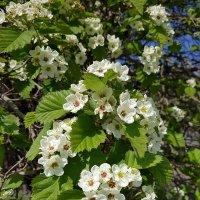 Весенние цветы. :: Anna Gornostayeva