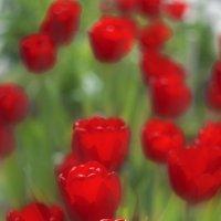 Факелы весны :: Наталья Киселёва