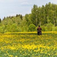 """""""Выйду в поле с конём..."""" :: Владимир Безбородов"""
